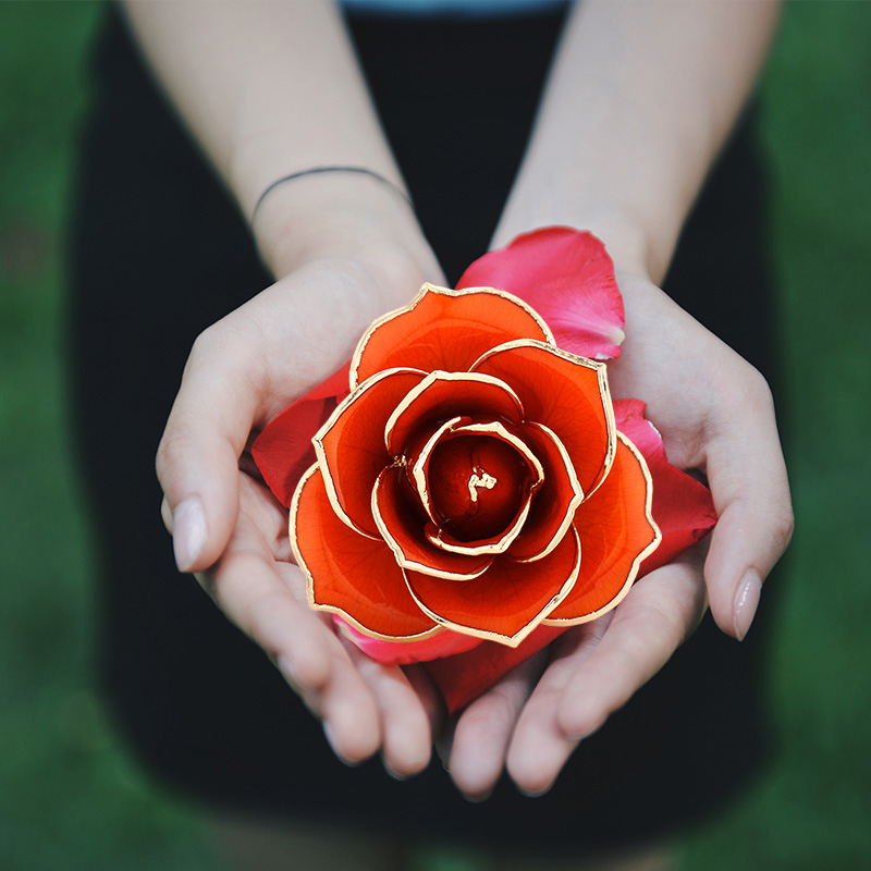 Love Is A Rose of Orange And Gold (natural Rose)